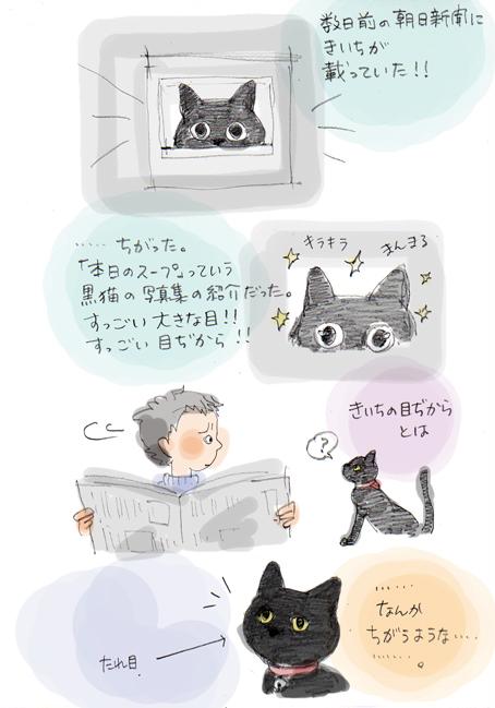 井の中の目ぢから猫