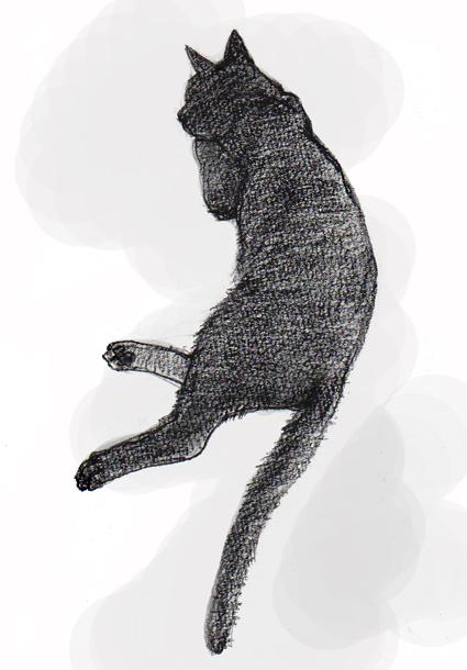 黒猫の背中