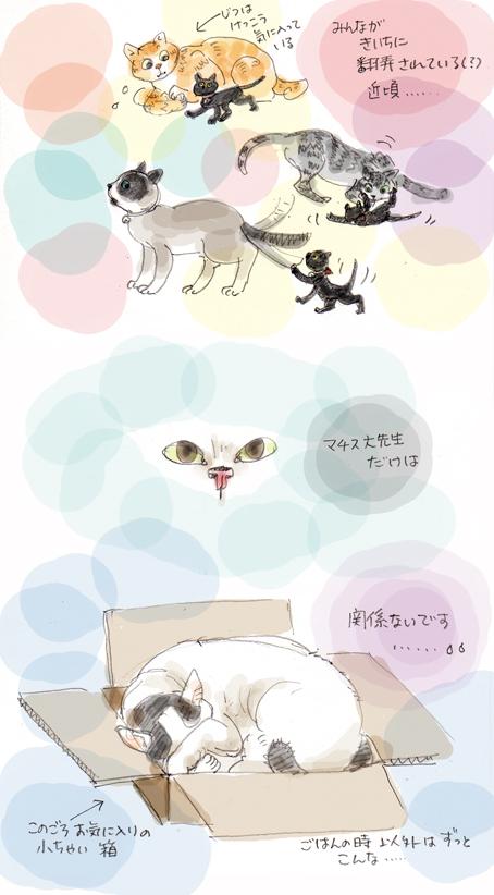 別世界のヒト(猫)