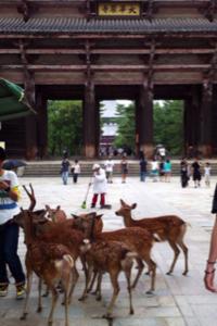 奈良の東大寺にいってきた