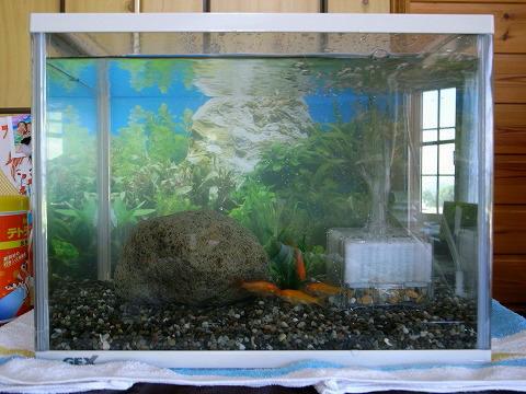 金魚とロングシュートと嵐ゴト