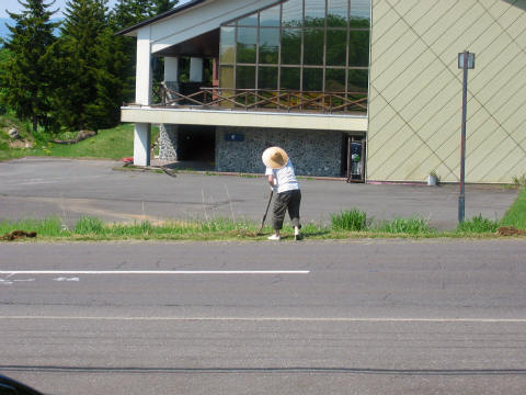 沿道の苗植え