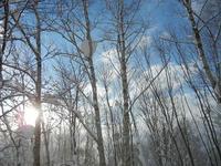 ニセコの冬の朝