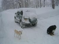 雪 ゆき 雪~