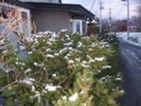 アジアで一番と初雪と