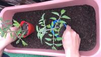 家庭菜園の勧め