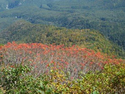 大雪山の冴えない紅葉