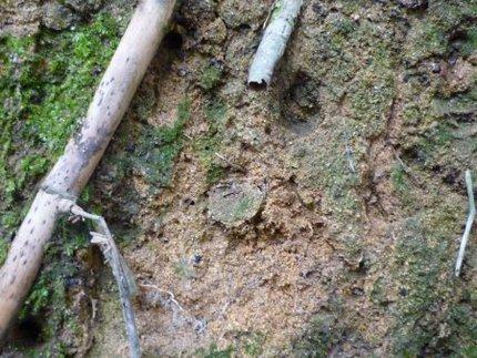 キシノウエトタテグモの巣穴