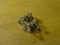 2か月生きながらえた麻酔されたクモ