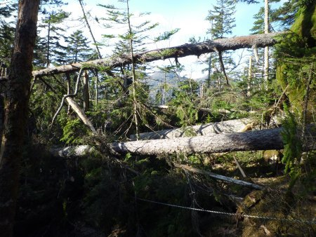 然別湖周辺の風倒被害