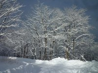 11月の大雪と冬の木々の光景