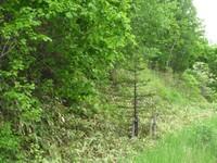 無意味な森の中の視線誘導樹
