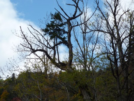 木の上に生えた木