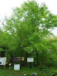 渡島半島の森と植物