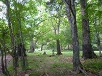 奥日光の巨木の森