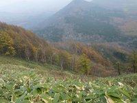 カラマツの黄葉の微妙なグラデーション