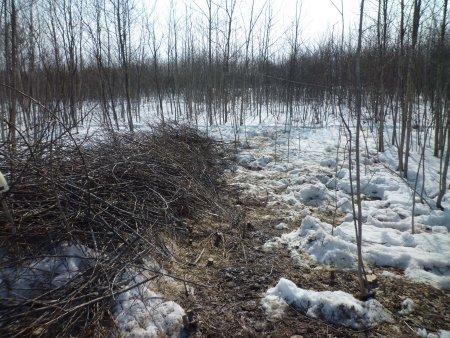 思いつきのような河畔林伐採は中止すべき