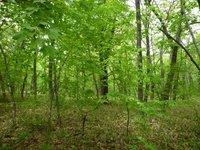 生物多様性に富む農高カシワ林の自然