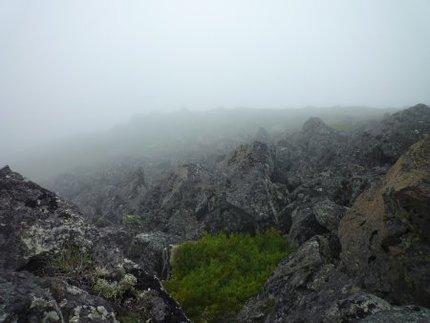 マツダタカネオニグモは大雪山の高山帯に生息しているか?