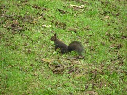 オニグルミを食べる動物たち