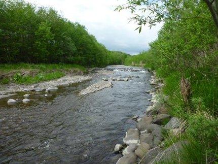 居辺川の現状(その1)