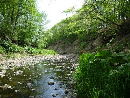居辺川の現状(その2)