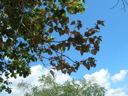 虫に食べられる樹木