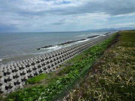 十勝の海岸とイソコモリグモ(その2)