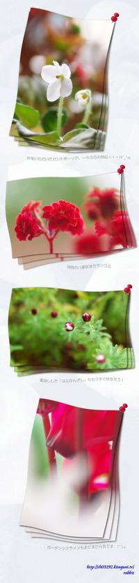 我が家の小さな花達
