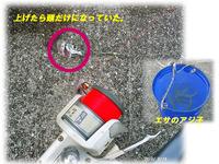 アジ子の泳がせに挑戦!糸島・西ノ浦漁港