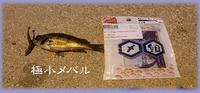 糸島・西浦漁港にメバルを・・・・