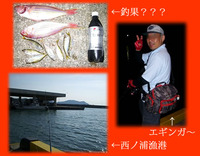 アジコ釣りとエギングin西ノ浦漁港