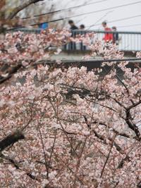 2016年花の季節
