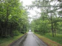 雨のからまつの森