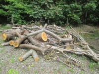 薪用の木を貰った