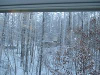 雪が降り続く