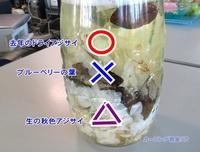 なんちゃってプリ・アジサイ編~その5
