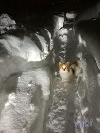 12月の予定&いきなり大雪