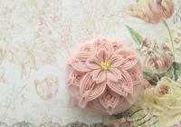 ポインセチアから桜
