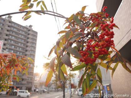 宮の森日記●しばしの札幌滞在