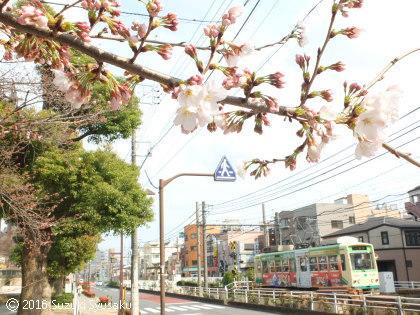 宮の森日記【出張編】●3/28(月)春の東京