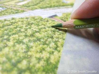 宮の森日記●緑
