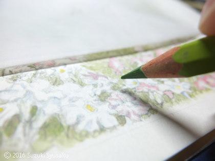 宮の森日記●植物の絵