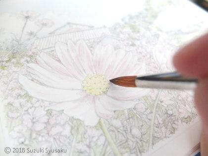 宮の森日記●秋桜