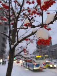 宮の森日記●寒波