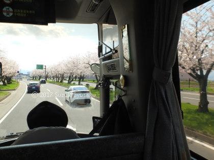 宮の森日記【出張編】●4/28(金)桜満開の弘前へ