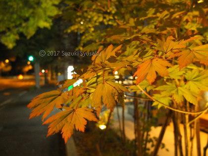宮の森日記●紅葉