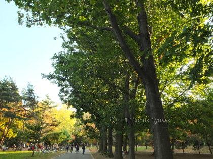 宮の森日記●秋晴れ