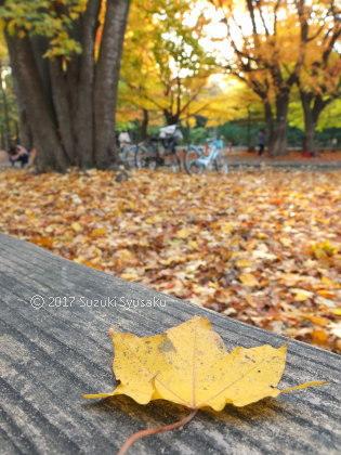 宮の森日記●円山公園