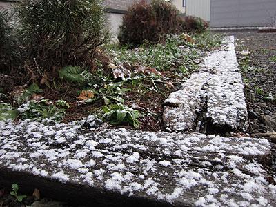 やっと初雪